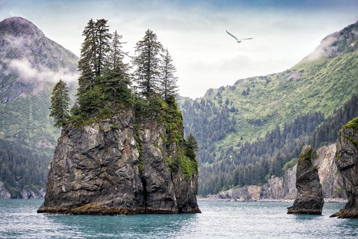 Cruise and watch for animals through the Kenai Fjords National Park.