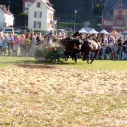 course-de-char-184017249-aventureaugalop