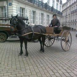tournage-cheval-equestre-cessezlefeu-Photo0261