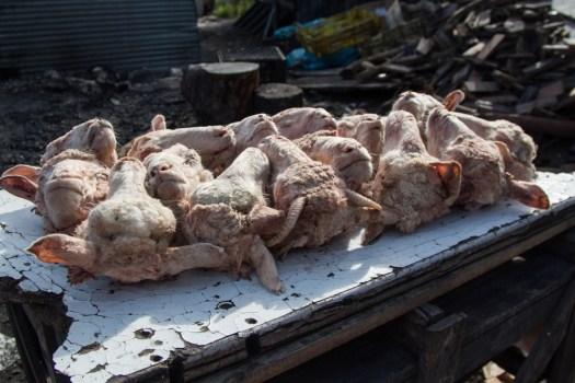 cape town langa township smilies sheep heads