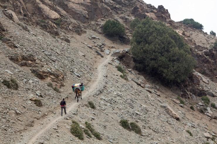 morocco atlas mountains trek with mule