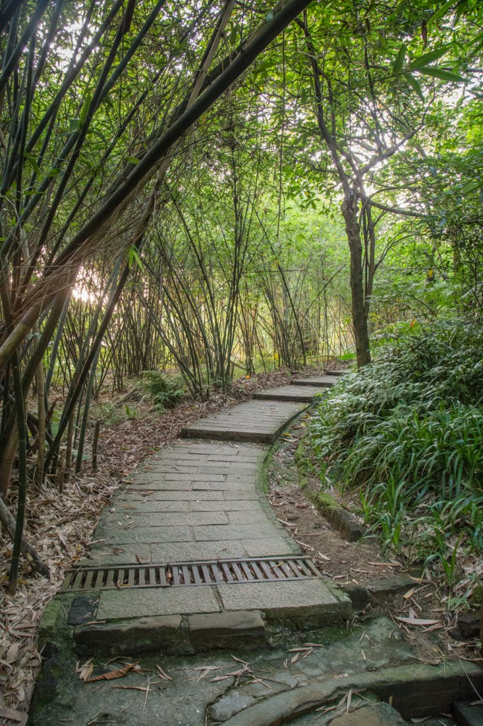 elephant mountain stairs with bamboo