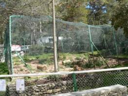 Tigre zoo Faron