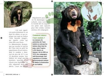 L'ours malais