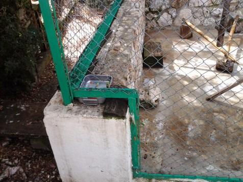 47. Lémuriens