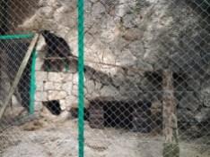 55. léopard, panthère