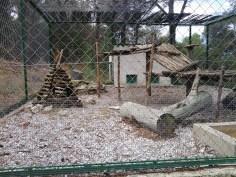 6. Puma