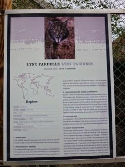 69. lynx pardelle
