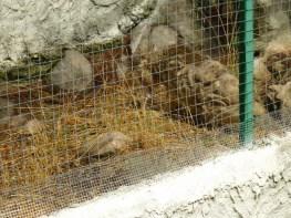 79 Chat des marais malade