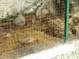 80. Chat des marais malade