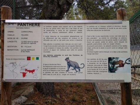 9. Panthère