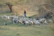 élevage en Roumanie
