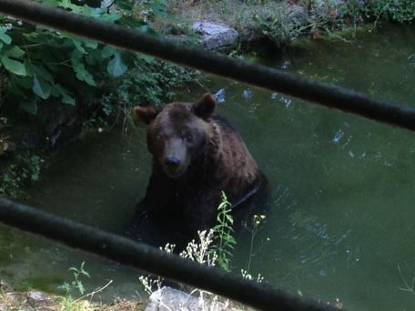 L'ours Bruno