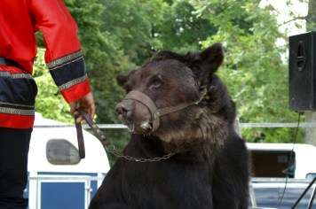 L'ours Micha des Poliakov