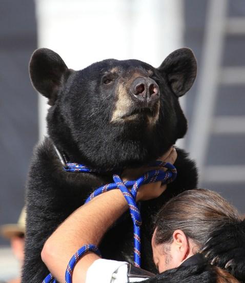 Dresseur d'ours