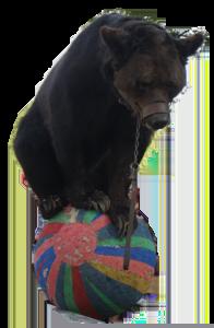ours Poliakov