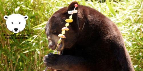 Non au spectacle d'ours à la VIème fête Gallo-Romaine de Châteaubleau