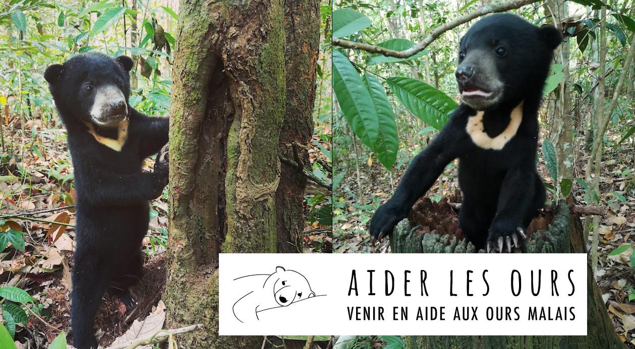 Aide à la construction d'enclos forestiers pour les ours malais