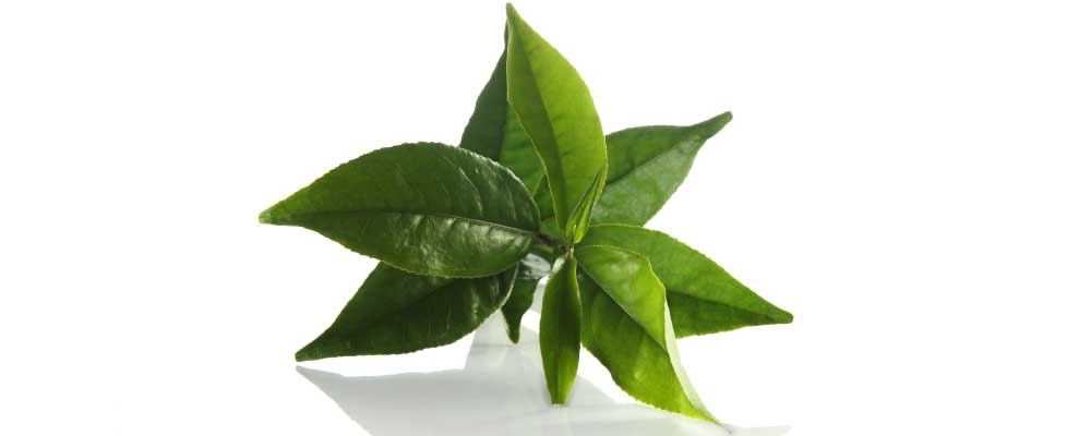 Benefits of Green Tea to Stressed Complexion