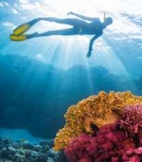 hawaii bans sunscreens coral bleaching
