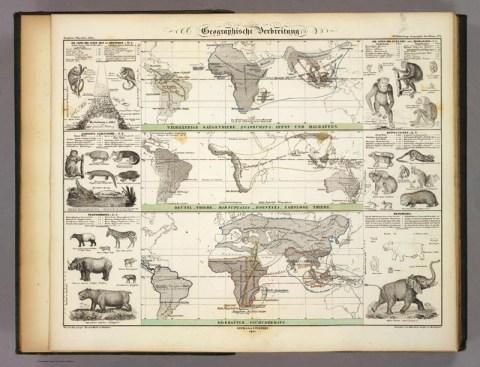 Geographische Verbreitung der Tiere -- Quelle: humboldt-portal.de