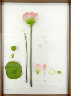 Alberto Baraya, Expedition Berlín, Herbarium of Artificial Plants, 2013 - fortlaufend. Verschiedene Materialien. Courtesy Alberto Baraya; Galeria Nara Roesler, Sao Paulo