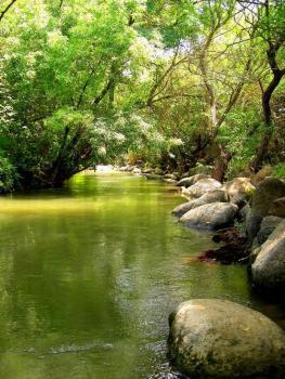 Природа Израиля / Природа / Справочная информация ...