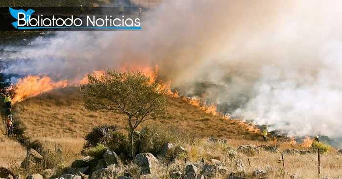 Incendio más voraz que el de Amazonia destruye África Central