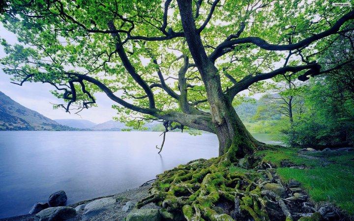 green_tree_near_the_lake_wallpaper_39ee1