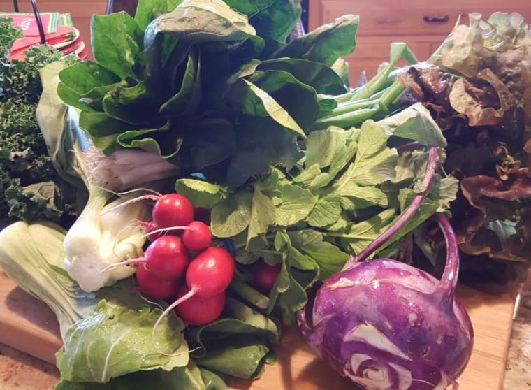 My First weekly CSA Share