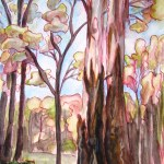 Painting showing the lovely bark on a eucalyptus regans tree in victoria