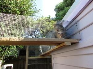 cat using sky tunnel