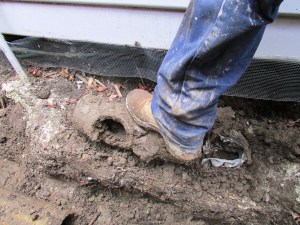 cement drain pipes were put into the ground with exposed holes in them