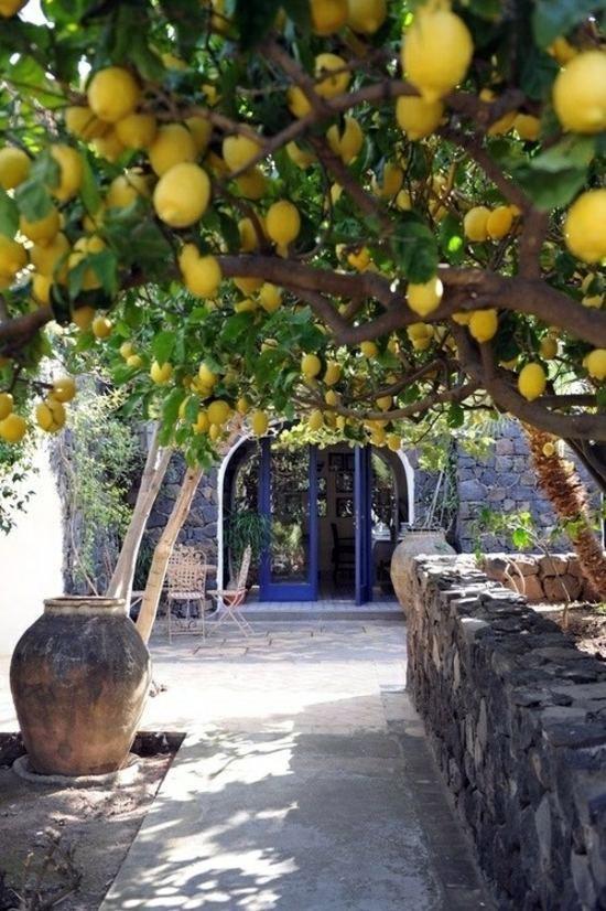 Mediterranean Garden This Is An Achievable Goal In