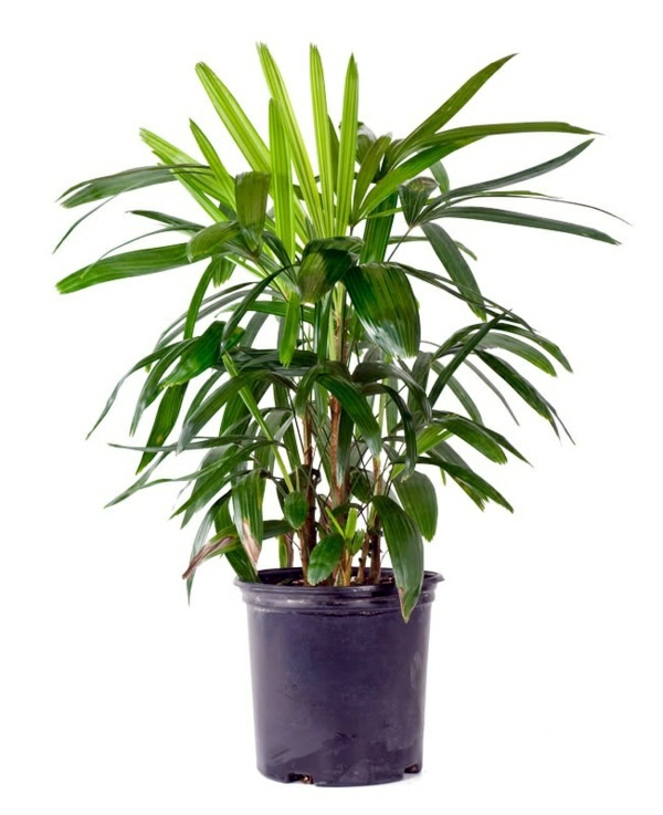 Most Popular Indoor Plants