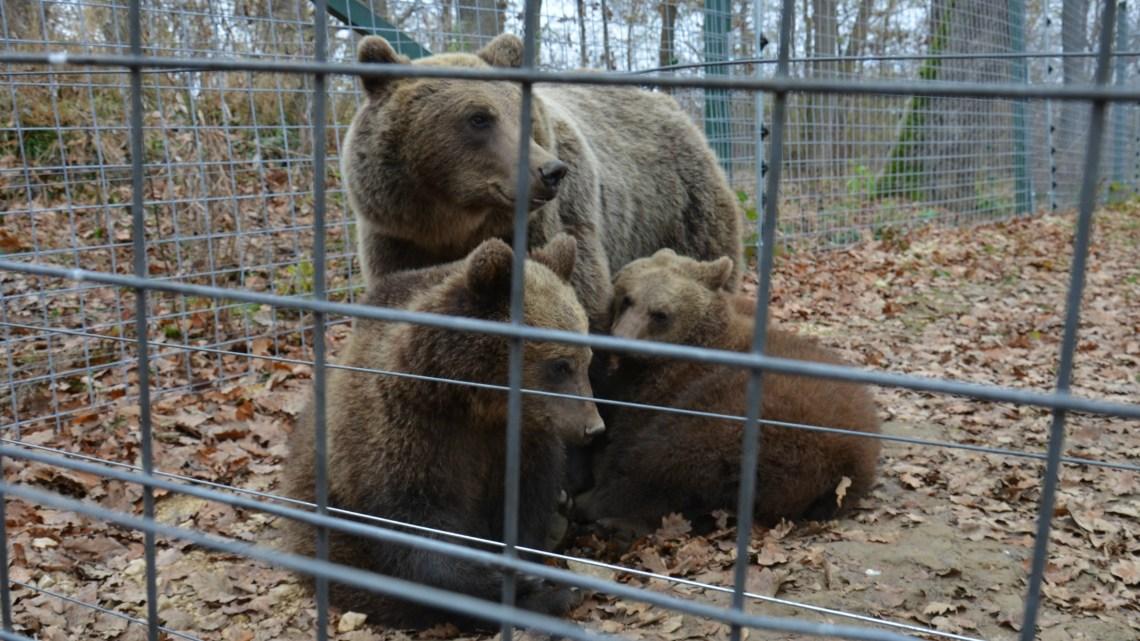 Libearty: vedere gli orsi da vicino in Romania