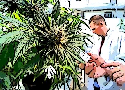 Commercializzazione della cannabis sativa l:la sentenza