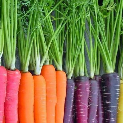 The 6Superpowers of Carrot Seed Oil