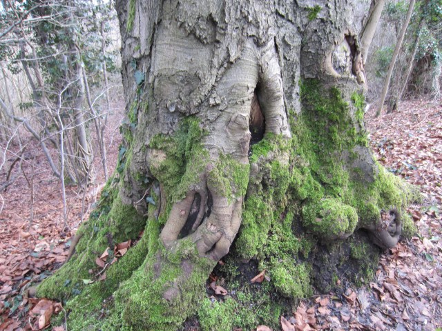 More gnarled roots
