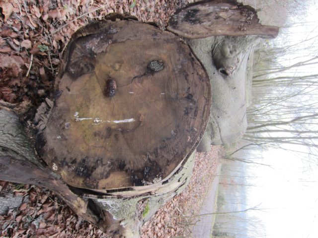 Log face (can you see it?)