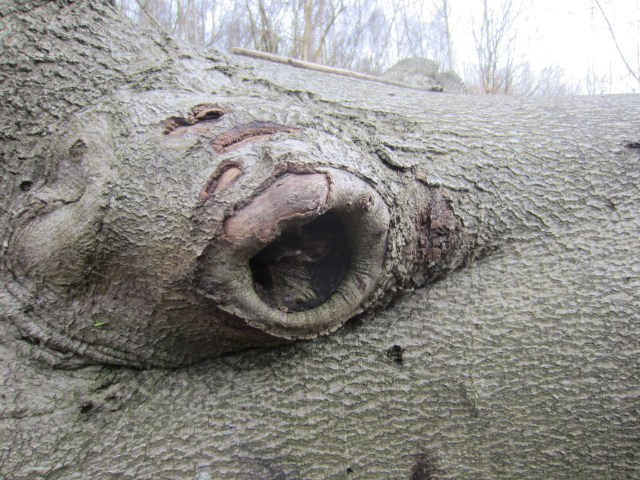 Tree screaming