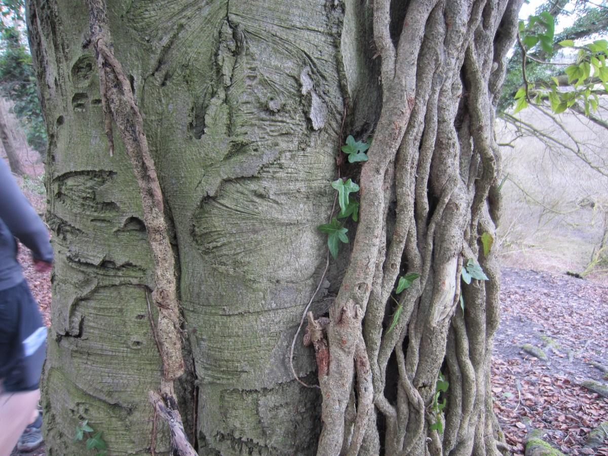 Ivy attack