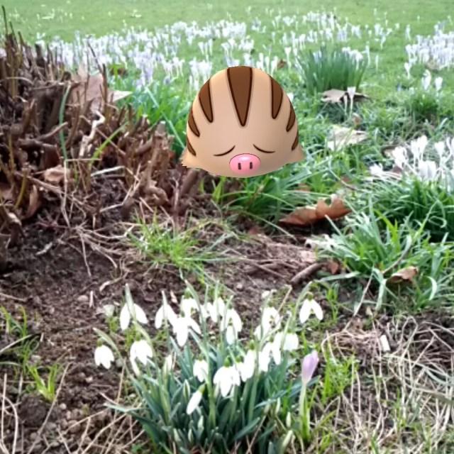 porky-slug smells spring