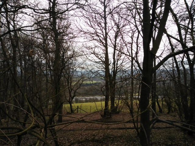 You can see the motorway through the trees!