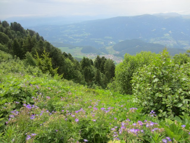Wild flowers and gorgeous views
