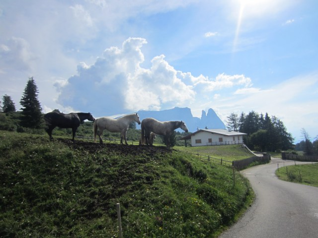 Horses at the end of a walk