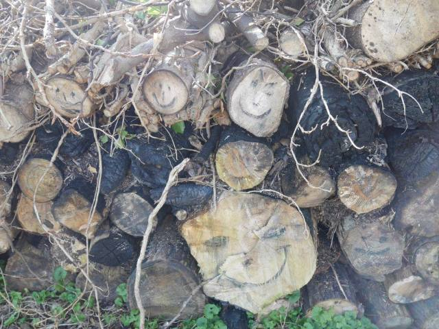 Log faces