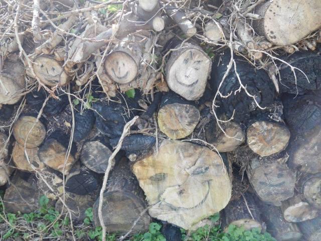 Log faces