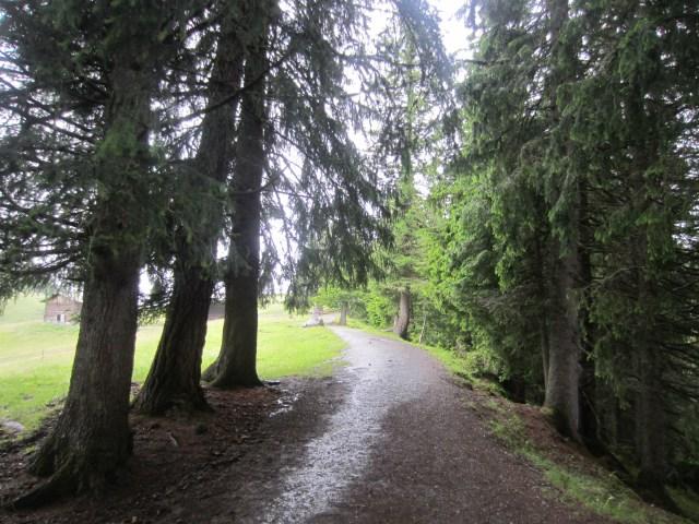 The trees still look pretty in the rain