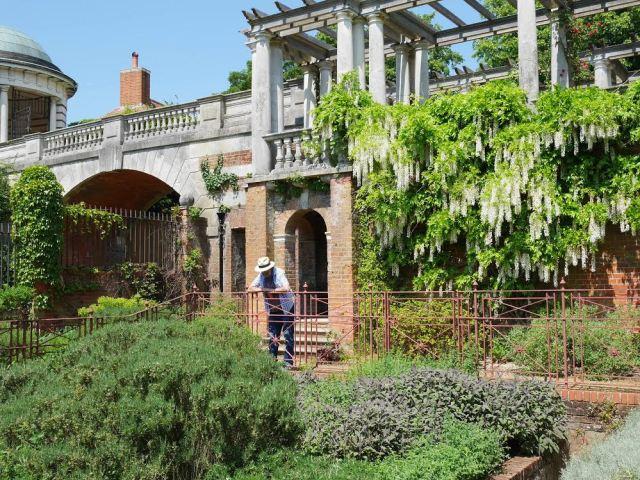 Dad in the pergola garden